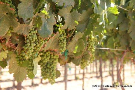 Finca Altozano vineyards img