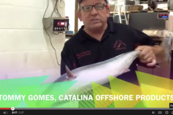Tommy Gomes Filets a Fish with Cur8eur ONLINE & Little Fork Chica