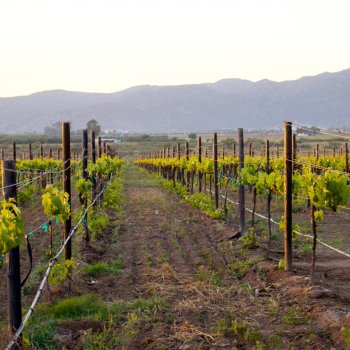 Facebook LIVE : Monday, 9.23.19 – The Fight for Valle de Guadalupe