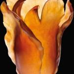 Daum Crystal Tulip Vase French Craftsmanship $4700