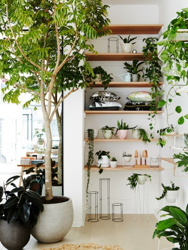 Lovely Indoor House Trees