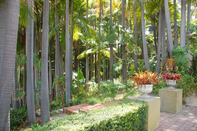 RobinsonGardens_PalmForest