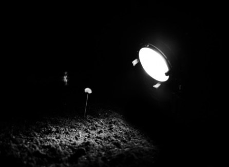 "Hicham Berrada, Bloom, 2012, Super16 scan 2k, Video, 2'36"", Black & White, 5 min, Installation version. Image courtesy of Hichal Berrada and Kamel Mennour."