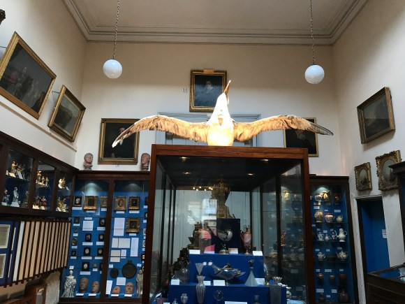 Museum display of wooden and glass cabinets displaying rows of objects with labels, in the centre a large stuffed bird, an albatross.