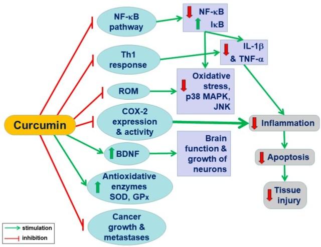 curcumine actifs