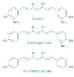 curcuminoïdes-du-curcuma