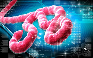 FAQ: The Deadly Ebola Virus