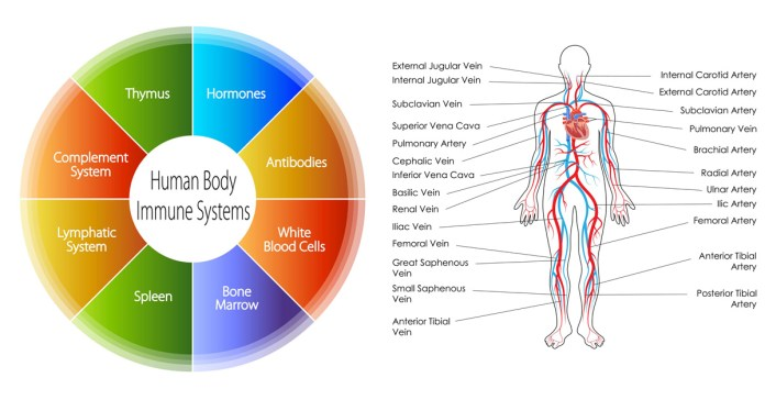 How can I strengthen my immune system naturally?
