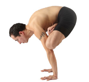 Padma Bakasana - Crane in lotus pose