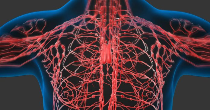 5 Ways To Improve Lymphatic System And Its Importance