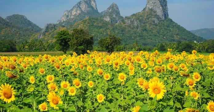 Ayurveda: Tips For Spring