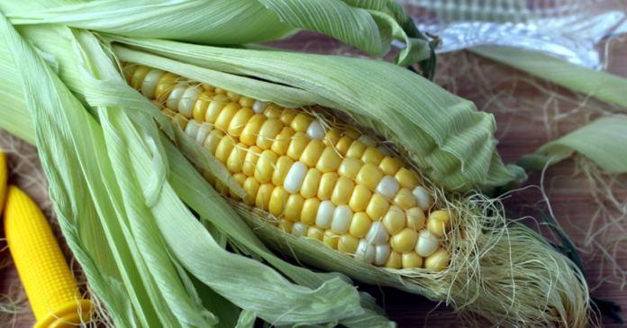 Corn Silk Tea That Treats Urinary Tract Infections
