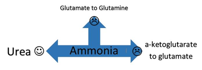 glutamate-amine