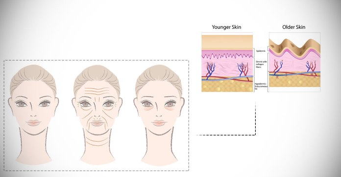 Which_Foods_Should_I_Avoid_To_Prevent_Skin_Aging