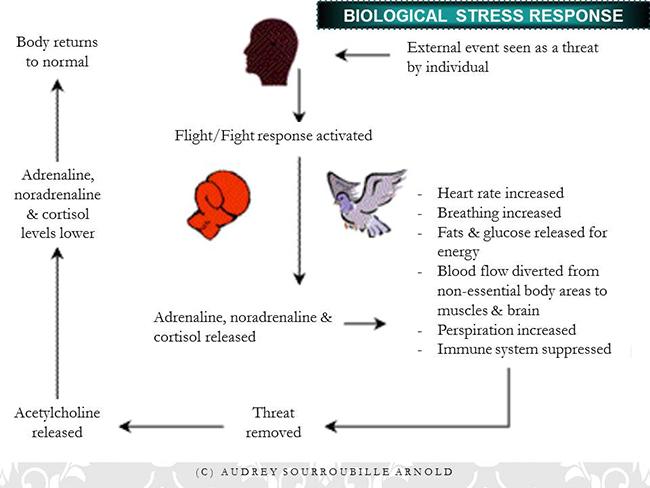 stress_ft