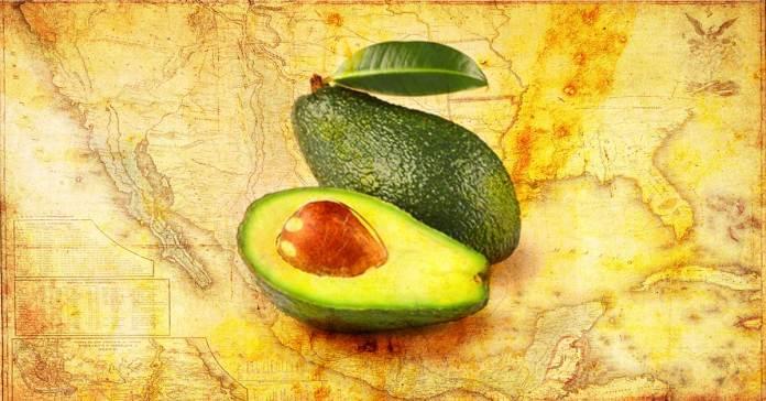 Origin of Avocado