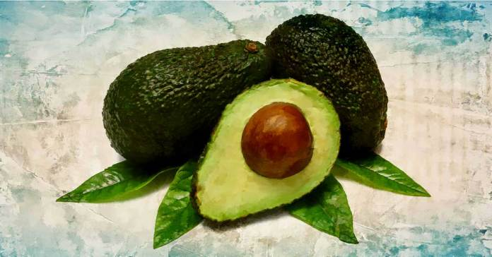 Benefits of Avocado leaves
