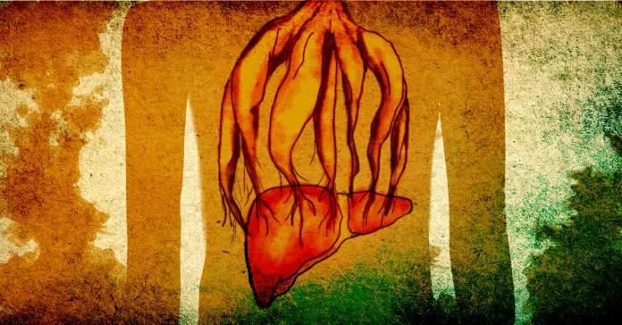 Ashwagandha For Liver