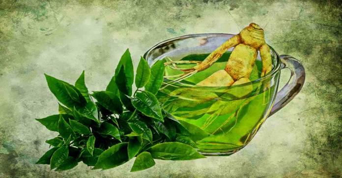 green-tea-and-ginseng