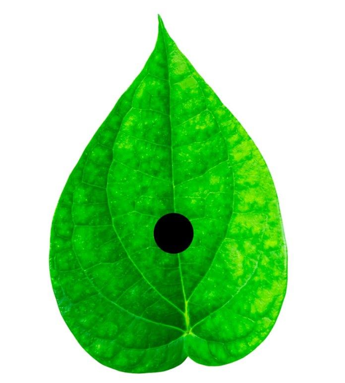 dot on a leaf