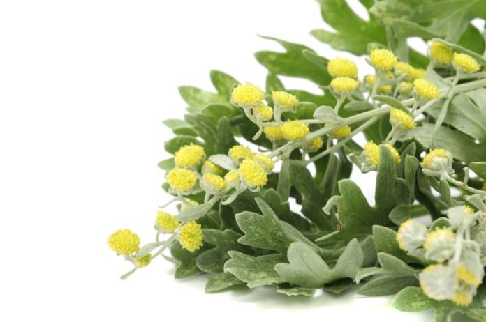 herbs to kill intestinal parasites