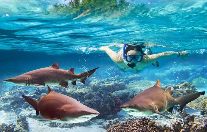 Myth: Sharks Will Come After You If You're Swimming In The Ocean
