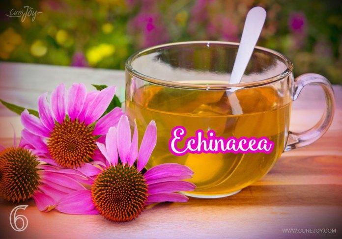 6-echinacea