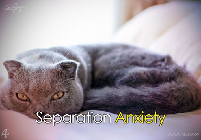4-separation-anxiety