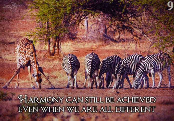 9-harmony-can-still-be-achieved-even-when-we-are-all-different