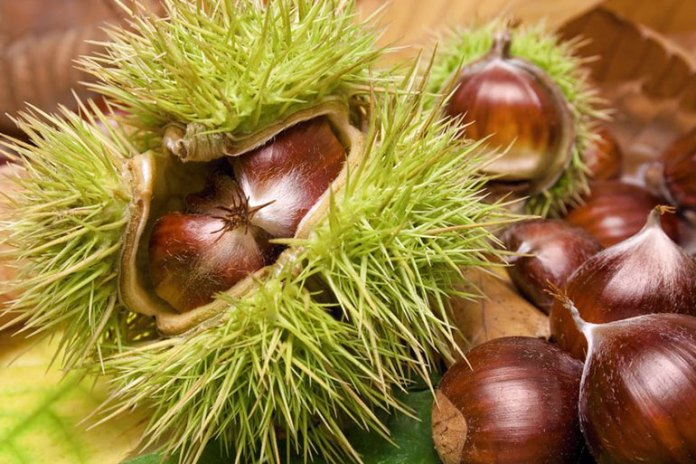 Horse Chestnut Helps Get Rid Of Cellulite