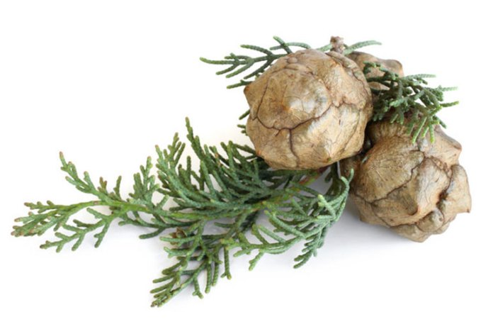 Cypress essential oil provides menopause relief