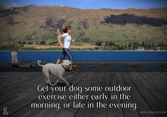 1-get-your-dog-some-outdoor
