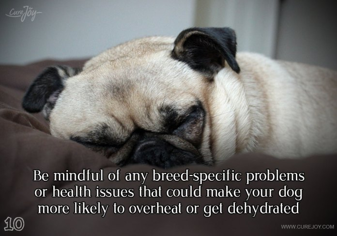 10-be-mindful-of-any-breed-specific-problems