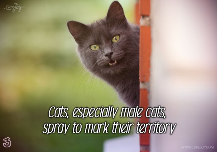 3-cats-especially-male-cats-spray-to-mark-their-territory