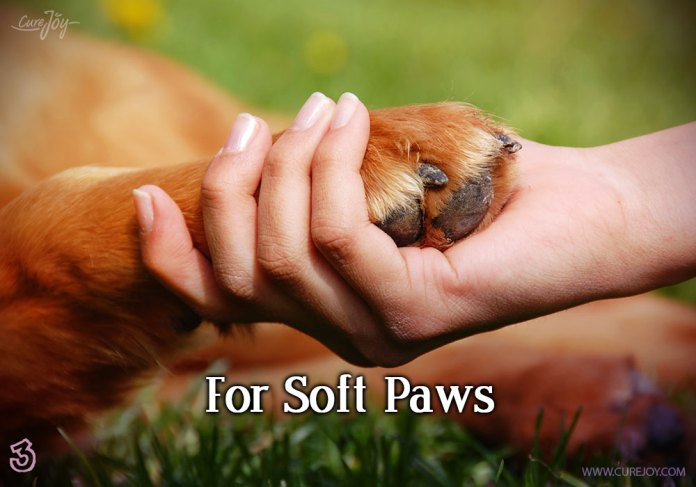 3-for-soft-paws