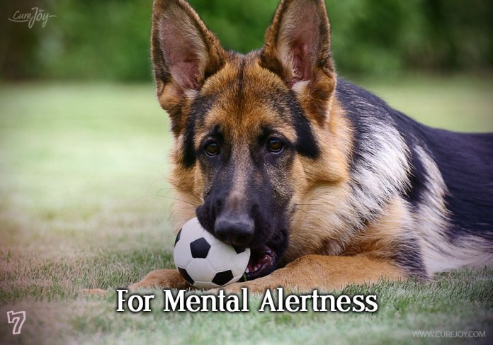 7-for-mental-alertness