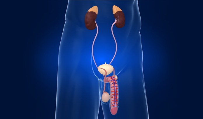 Causes Of Urinary Tract Infection In Men