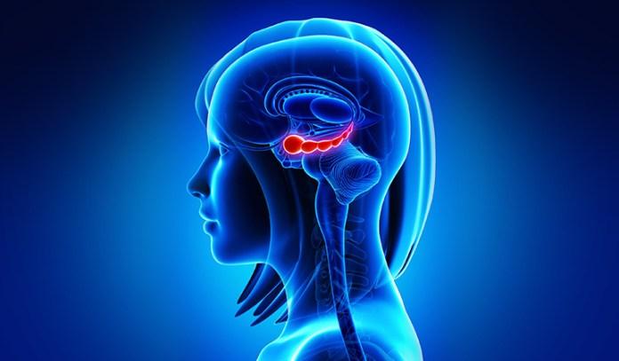 Hippocampus_Can Depression Cause Brain Damage