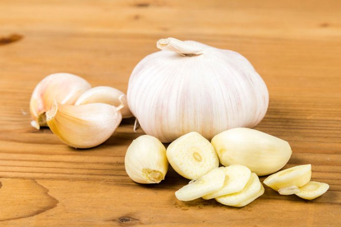 Garlic reduces dog bite infections