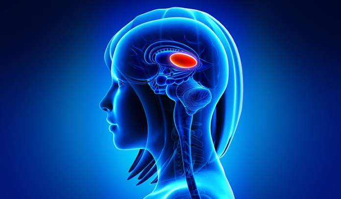 Thalamus_Can Depression Cause Brain Damage
