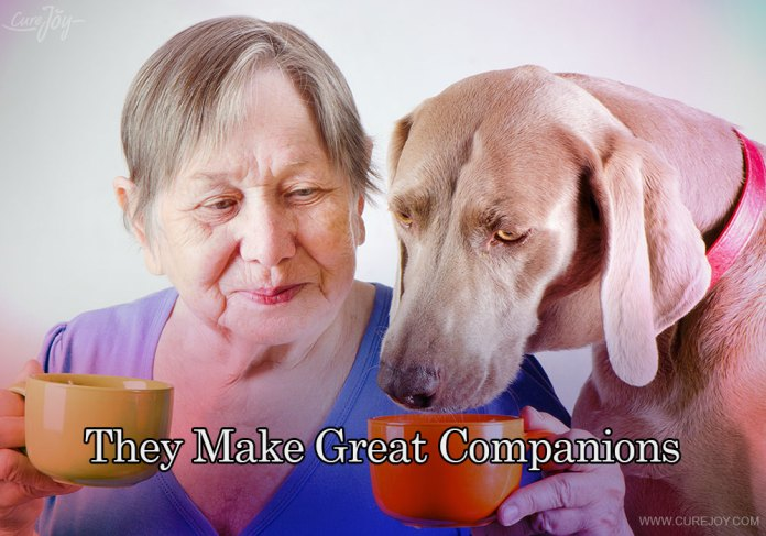 1-they-make-great-companions
