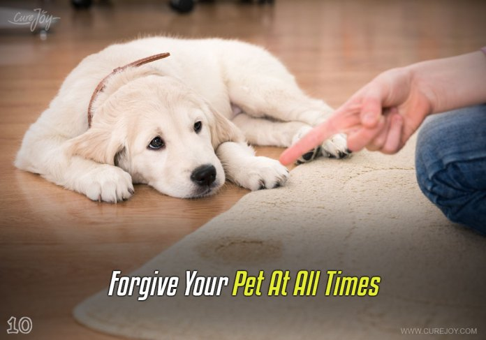 10-forgive-your-pet-at-all-times