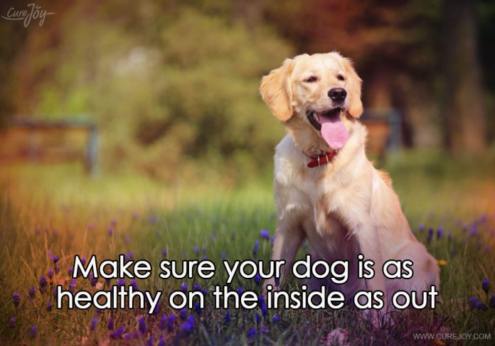 2-make-sure-your-dog-is-as-healthy-on-the-inside-as-out