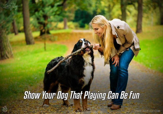 3-show-your-dog-that-playing-can-be-fun