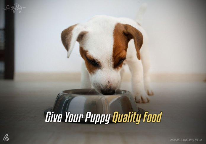 4-give-your-puppy-quality-food