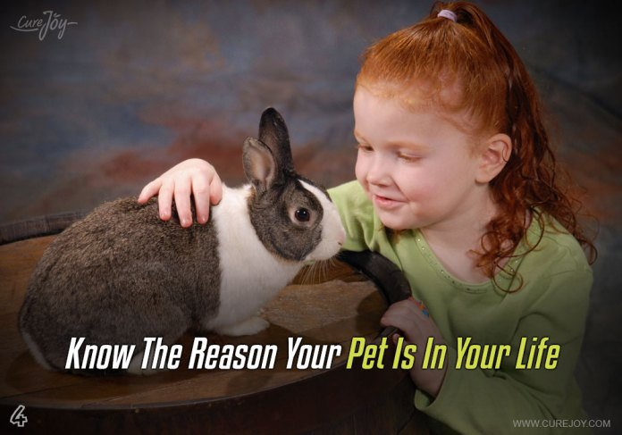 4-know-the-reason-your-pet-is-in-your-life