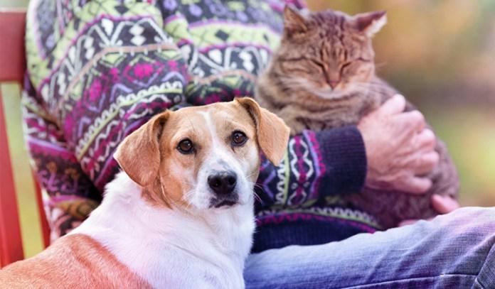 Intense pet-owner relationships.