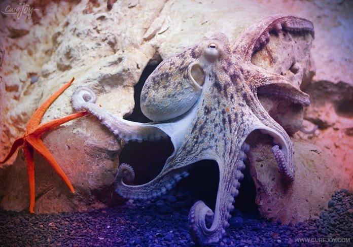 Buddies: starfish and octopus