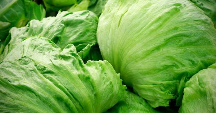 Benefits Of Lettuce