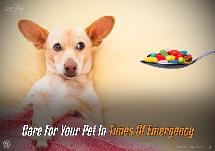 9-care-for-your-pet-in-times-of-emergency